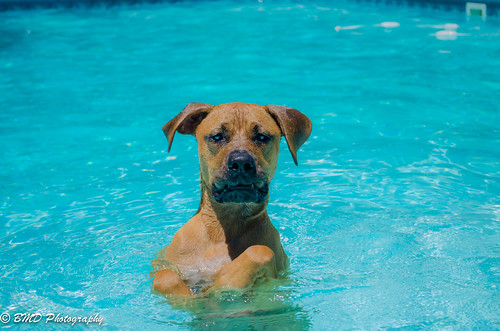 best dog pool toys for swimming